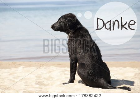 Speech Balloon With German Text Danke Means Thank You. Flat Coated Retriever Dog At Sandy Beach. Ocean And Water In The Background