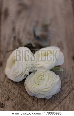 Three White Ranunculus Flower Over Wooden Tabletop