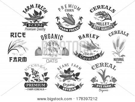 Cereal and grain icons for market or product store. Wheat or rye ears, buckwheat seeds and oat or barley millet flour bag and rice sheaf. Agriculture corn and farm legume beans or pea. Vector set