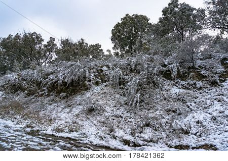 Roadside Landscape With Plants Covered With Snow