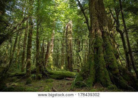 Native bush, North Island, New Zealand