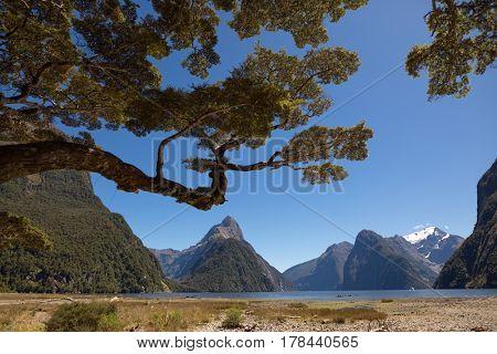 Milford Sound, South Island, New Zealand