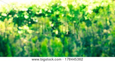 Abstract Colorful Nature Bokeh Backdrop Banner