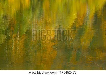 Golden water reflection of autumn forest, closeup