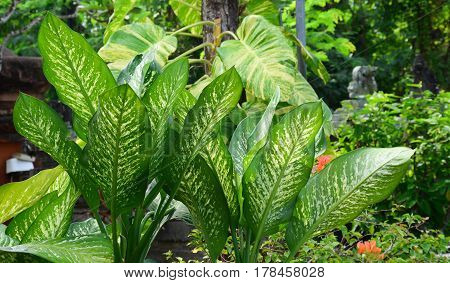 Hepatica Plants At The Botanic Garden