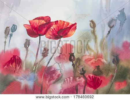 Sunny meadow of poopies watercolor background. Valentine illustration