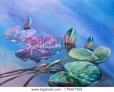 Water lily bud with leaf watercolor background. Night color. Summer illustration