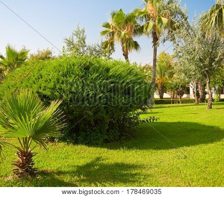 Green tropical garden with palm trees