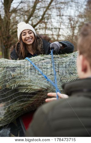 Couple tying a Christmas tree to the roof of a car, vertical