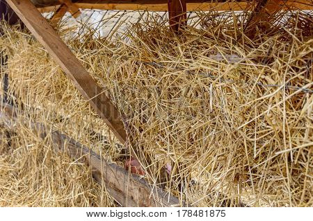 Straw in the trough. Rural scene .