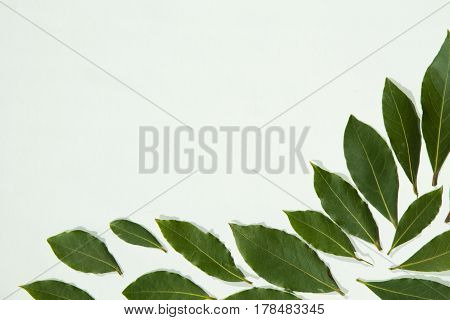 Group of three fresh bay leaves on white background with copy space