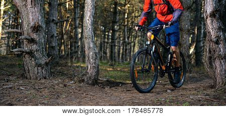 Cyclist Riding the Bike on the Trail in the Beautiful Pine Forest. Healthy Lifestyle and Sport Concept.