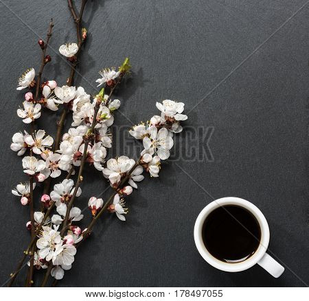 Cup of coffee and blooming tree branches with apricot  flowers on black slate background.