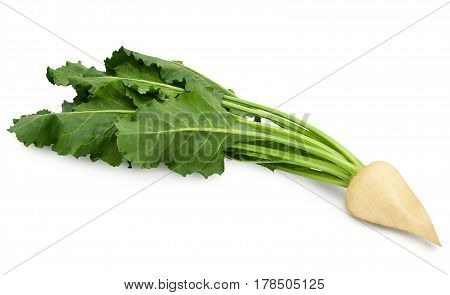 Fresh sugar beet with leaves isolated on white background. Design element for product label, catalog print, web use.