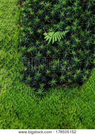 Green natural background of moss and fern