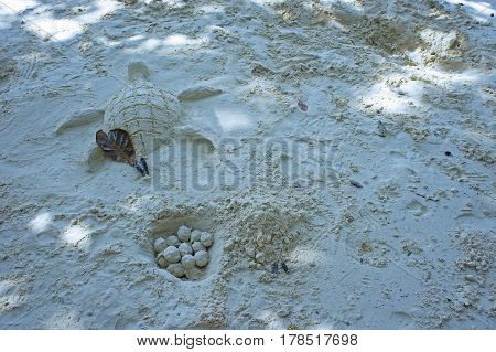 fun on the beach with turtle and egg sand sculpture