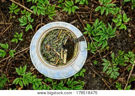 Tea in a cup and saucer on the ground among plants