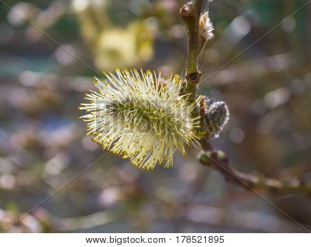 Beautifully blooming tree branches with interesting flowers