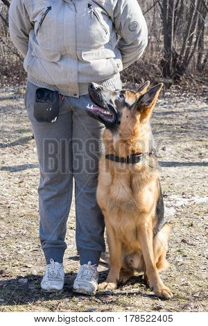 Shepherd Dog Sitting Near Its Owner During The Dog Training Obedient Course