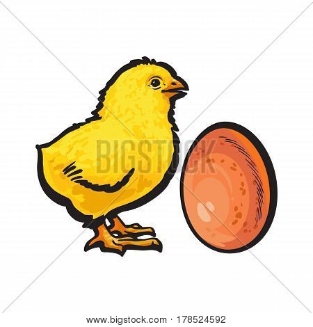 Little newborn chicken and whole brown egg, sketch style vector illustration isolated on white background. Hand drawn, sketched illustration of little yellow chick and chicken egg