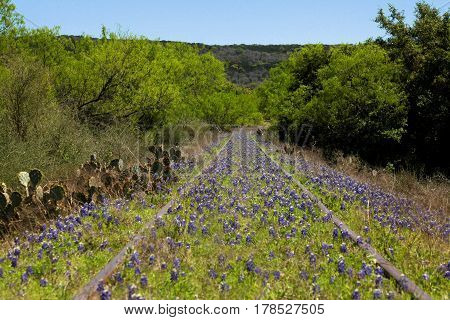 Abandond railroad in Texas full of bluebonnets and wild flowers