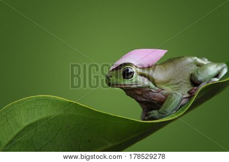 Frog is helmet with flower in bokeh