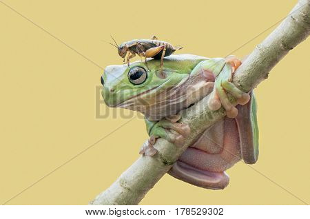 Frog and cricket is friendship together .