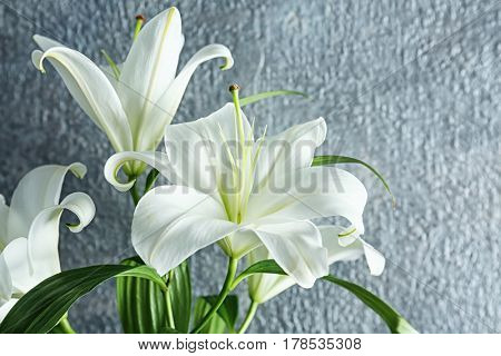 Beautiful white lilies on gray background, closeup