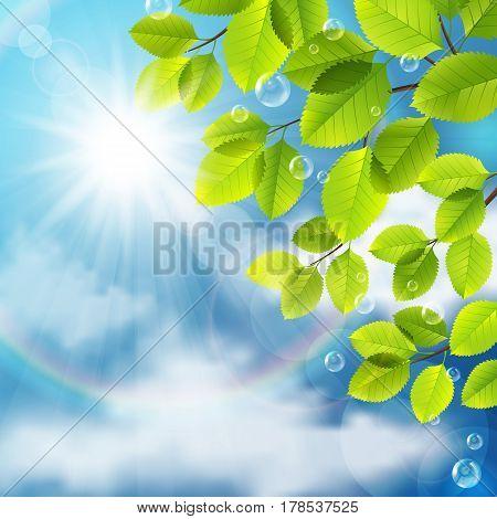 Vector illustration of green leaves on blue sky background