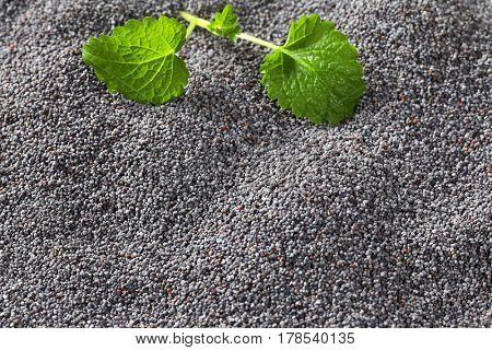 Whole black poppy seeds, full frame