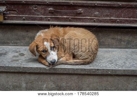 Homeless stray dog in Kathmandu looking at the camera