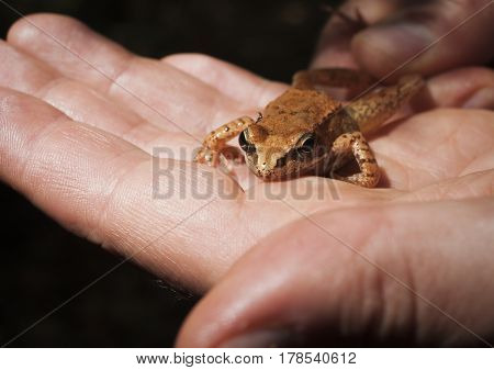 Beautiful frog in the Palm of a human hand