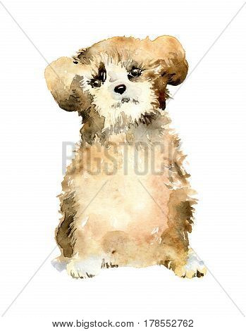 Cute puppy golden brown color on white background. Dog is symbol of 2018. Watercolor illustration