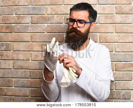 Bearded Brutal Caucasian Doctor Or Postgraduate Student Wearing Gloves
