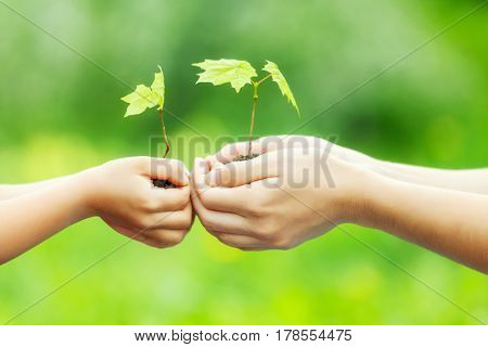 Adult and child holding little green plant in hands. Ecology concept