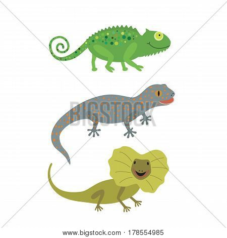 the set of three lizards chameleon frilled lizard Gecko