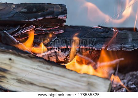 fire wood . Beautiful nature in the open air