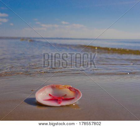 Tropical Symbol Seascape Divine