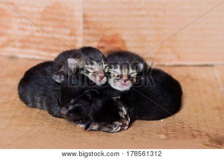 Little Blind Newborn Kittens Sleeping In A Cardboard Box