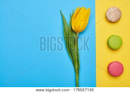 High angle of single yellow tulip with a line of macaroons on flatlay. One tulip flower and some confection. Different flatlay. Blue and yellow