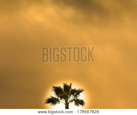 Sun Rise Behind Palm On Cloudy Day
