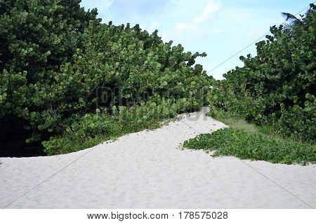 Uphill sand path through green trees and bushes tu get to a white sand beach with blue sky