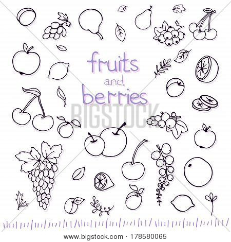 Collection of cartoon fruits and berries. Vector illustration. Set of fruit and berry icons.outline. Isolated.Web icon hand drawn in doodle style.Design elements