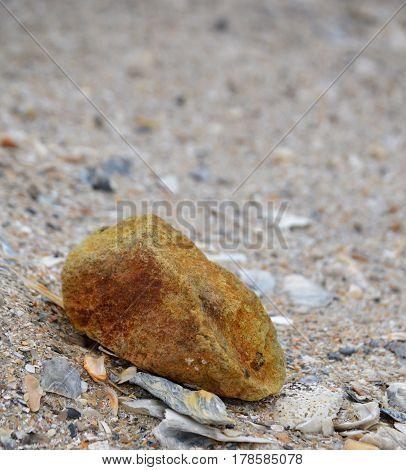 vertical shot of single rock on beach sand among shells