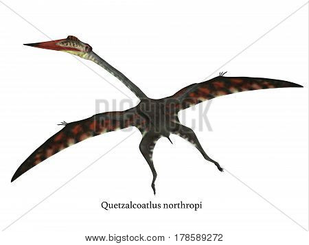 Quetzalcoatlus Flying Reptile with Font 3d illustration - The carnivorous Quetzalcoatlus was a flying pterosaur reptile that lived in North America in the Cretaceous Period.