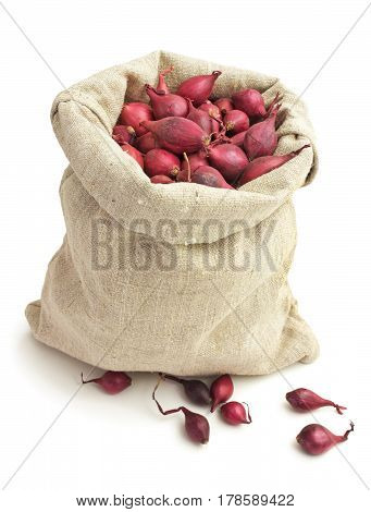 Small onions intended for planting in a linen bag