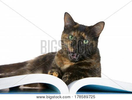Portrait of one Tortie Torbie Tabby cat with green eyes reading a book isolated on white background. mouth open licking face.
