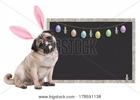 cute pug puppy dog with bunny ears diadem sitting next to blank blackboard sign with easter decoration on white background