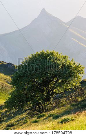 Spring landscape with a lonely tree on a green slope. Sunny morning in the mountains. Beautiful sharp rocks in the haze