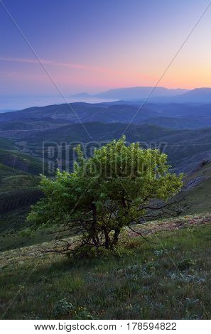 Landscape with a view to the sea. A lonely tree on a hill. Before dawn twilight